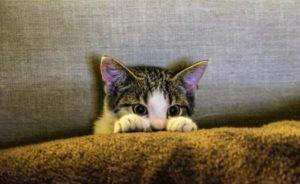 kitten-hiding
